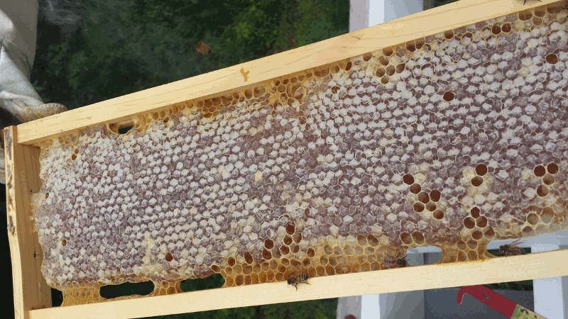 Honey Frame